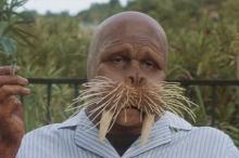 The-Walrus