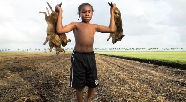 the-rabbit-hunt